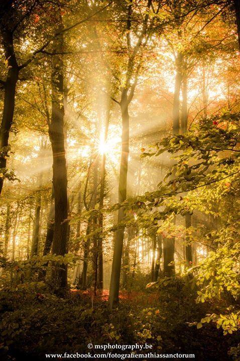 Sun through the trees - Op stap gegaan en het was precies niet echt, maar toch heb ik het mooi in beeld kunnen brengen.
