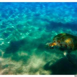 Turtle again