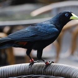 Brutale vogel in Burgers Zoo