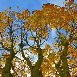 Drie op een rij in herfstkleur