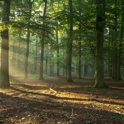 Leurse bos