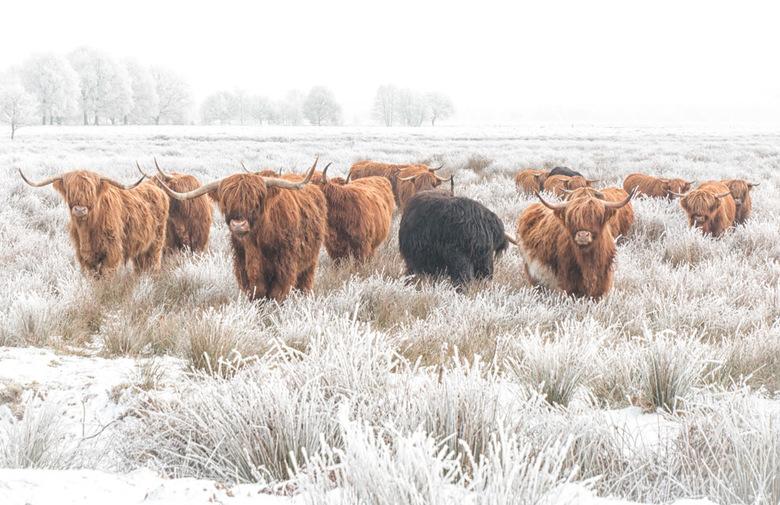 Schotse winterjassen - Die hebben het niet in ieder geval niet koud... en wat is het mooi buiten, niet? Een echt winter wonderland. Al geloof ik dat e