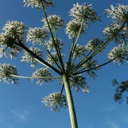 bloem tys damhuis  (5)