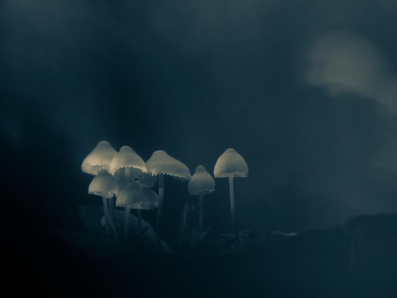 Into the dark woods... -