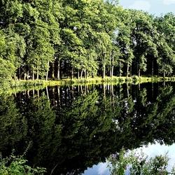 bomenrij weerspiegeling