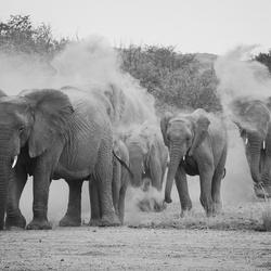 Desert Elephant Damaraland