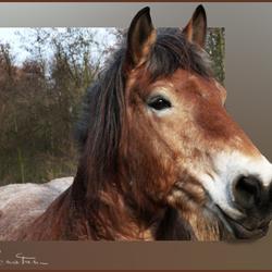 Paard wenst naar buiten