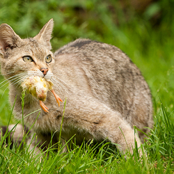 A Wild Cats Lunch