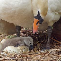 mam ik zie al wat haartje uit het ei.
