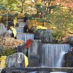 Hasselt de Japanse tuin in de herfst