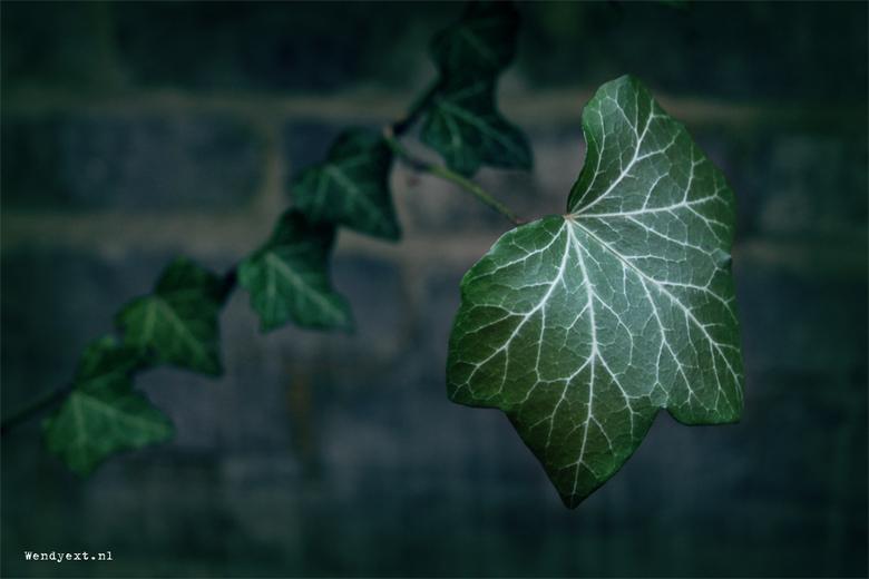 F@ntasy Leaf - Foto genomen in historische gedeelte Deventer.