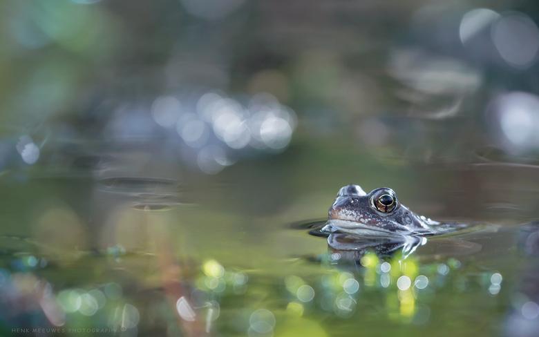 Zijn liefdesnestje - Deze bruine kikker wilde wel even trost zijn liefdesnestje laten zien en er even in poseren. Hij had de lampjes bewust even laten