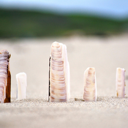 standing shells