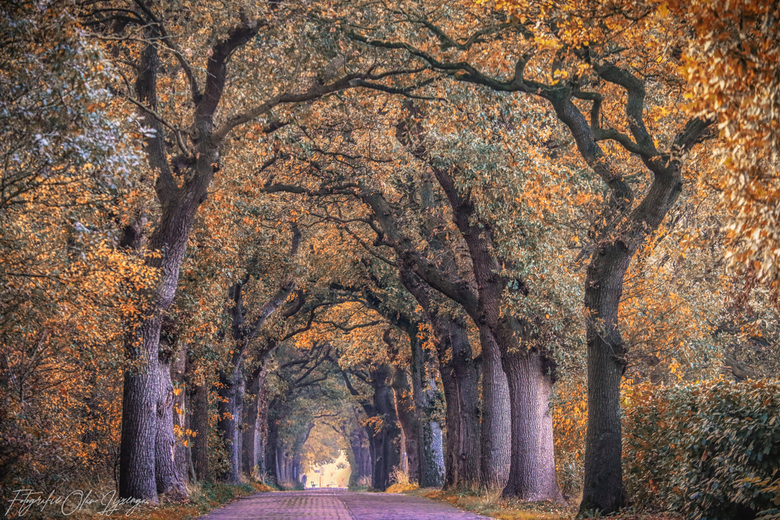 tunnel of trees -