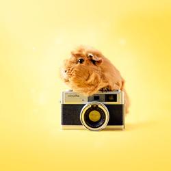 Pien camera