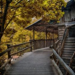 huis in het bos