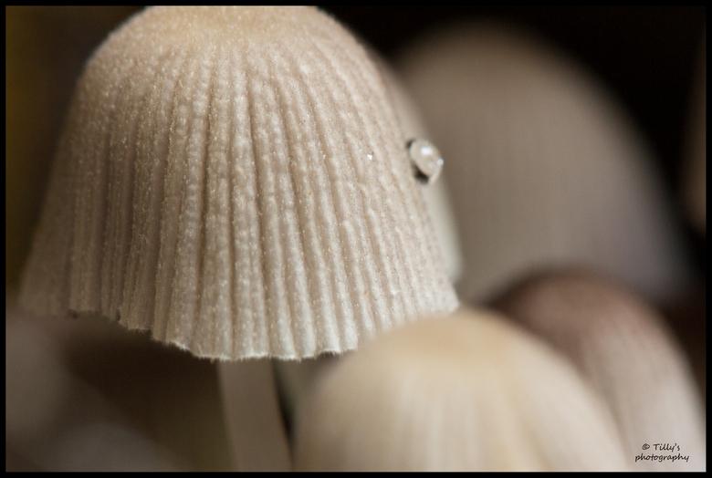 paddenstoelen, ook in dit jaargetij -