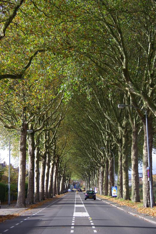 boompoort - Een drukke straat met hoge bomen