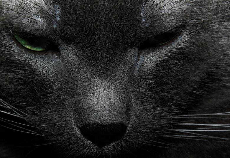 Dusty - Onze kat Dusty