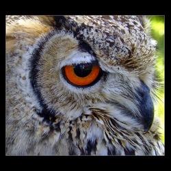 oog in oog