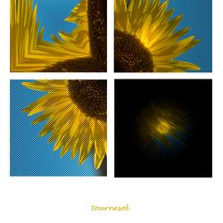 Een kwart van een zonnebloem