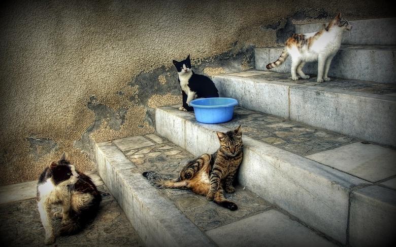 Les quatre chats - Laatst op vakantie in Italië wandelend in een oud dorp, 4 leuke katjes, ieder op een trede van de trap, allemaal een eigen pose...