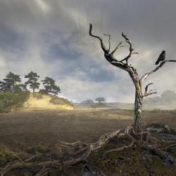 c-boers landschap-2