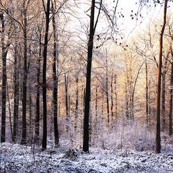 de bomen in het bos 1 1501300625mnw