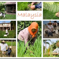 Ansichtkaart Maleisie.