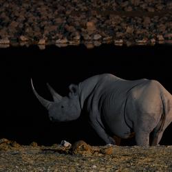 Moonlight Rhino