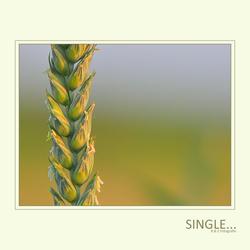 Single...
