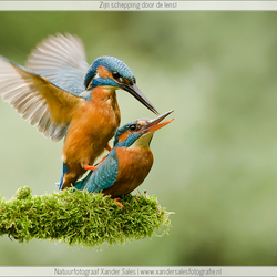 IJsvogel - Let's make love...