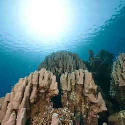 onder-waterlandschap