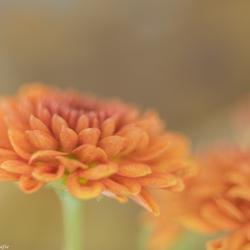 herfstbloemen