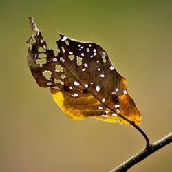 herfstblad vergaat