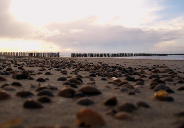 schelpjes op het strand - Deze foto is genomen met een gratis fotowandeling van pixelclass.nl aan het strand bij Nieuw Haamstede. <br />