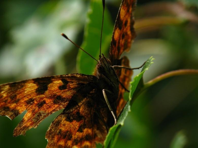 It's Mr. Butterfly - zomer 2012