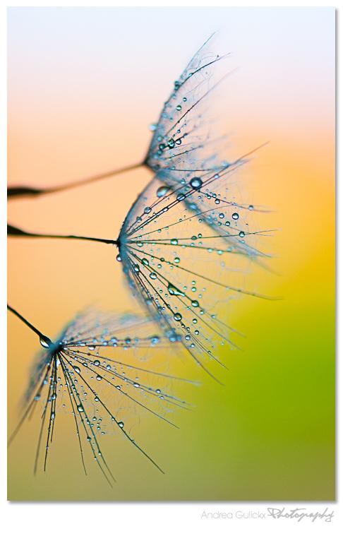 Waterpaint - Paardebloem pluizen in de vroege ochtend zonm. Ik word wel vrolijk als ik al die frisse kleurtjes op de achtergrond zie daar krijg ik wel