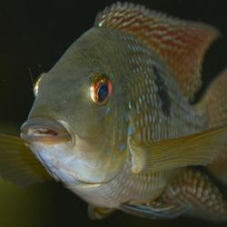 aquariumvis