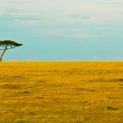 De onmetelijke leegte van de Serengeti