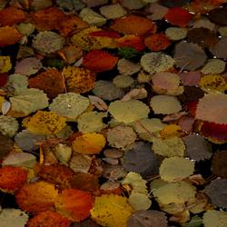 Waterdruppel in herfsttinten