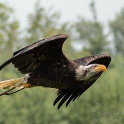 roofvogel gajazoo-