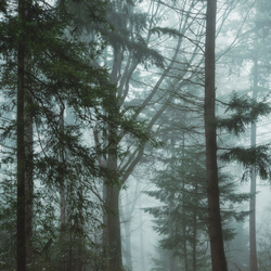 Don't get lost in the misty forest
