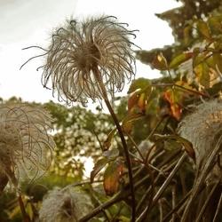 memoria del fiore