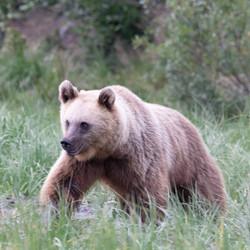 Prachtige beer