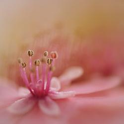 So roze !!