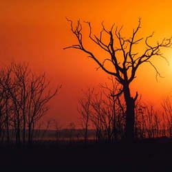 Dorre boom bij zonsondergang