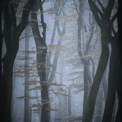 Misty mood forest