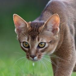 Nieuwsgierige kat