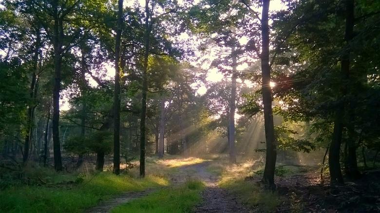 sunshine - Morning sunshine in the forest